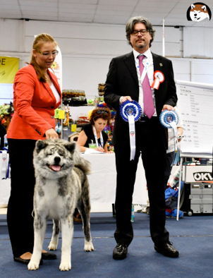 EURO DOG SHOW 2019