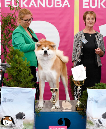 POLAND CLUB show 2019 Wrocław (PL) judge: Maureen Thompson (GB) 