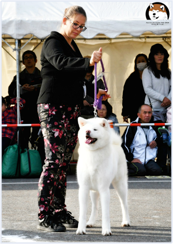 We are members of Polish Kennel Club under FCI and AKIHO (Akita Inu Hozonkai).