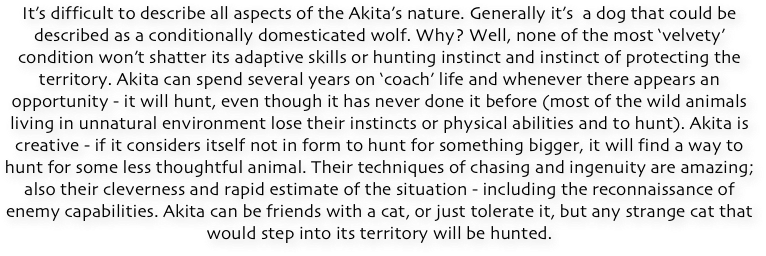 The character of Akita can be even more fascinating than its appearance. We know that Akita was a hunting dog, also fighting and great protector with a highly developed territorial instinct and a huge distrust of anyone outside its pack. We know also that Akita is strongly attached to its family, especially to one person, whose leadership is unconditionally accepted.