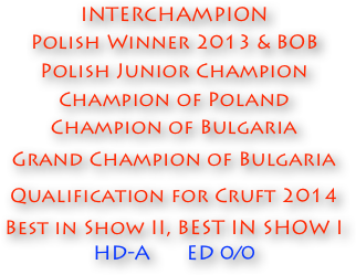 INTERCHAMPION