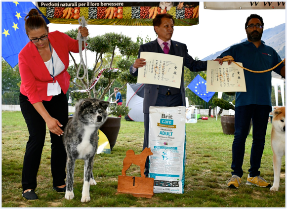 DOG SHOWS: