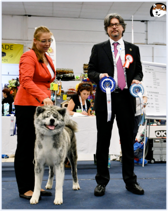 The Best Kennel of Akita in Poland 2016
