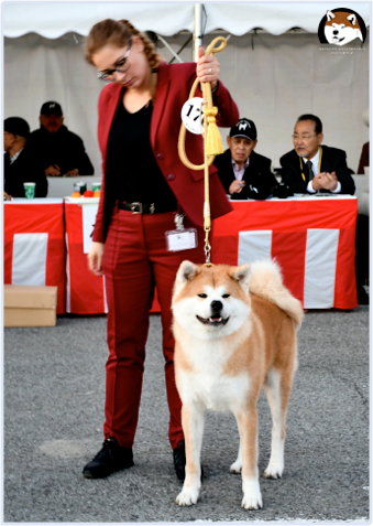 The Best Kennel of Akita in Poland 2016, 2017, 2018 & 2019